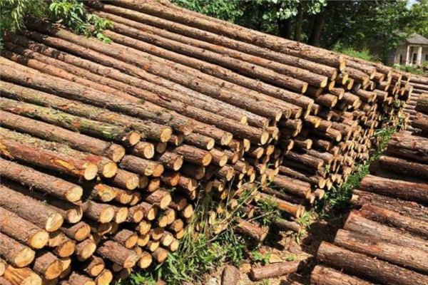太原短木桩工厂